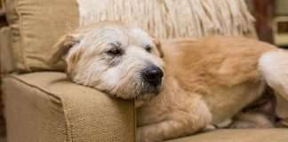 how protect your pet from parasites