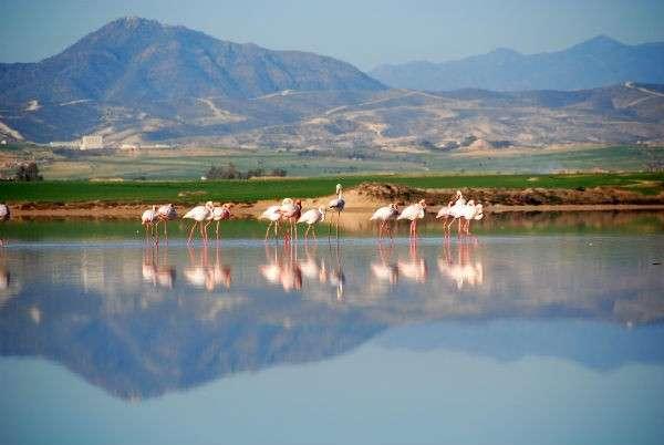 TravMedia United Kingdom 1222166 Flamingos at the Salt Lake Nt