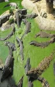 places to visit in Marbella Costa Del Sol