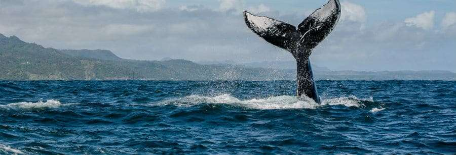Whale watching in Samaná Bay trips