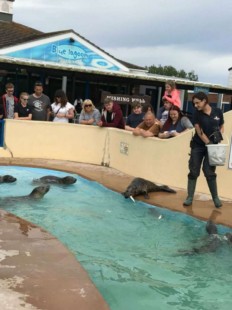 Skegness Natureland Seal Sanctuary Welcomes Dogs And Their Owners