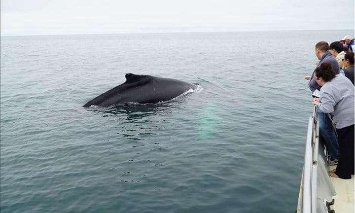 Golden Gate Whale tour