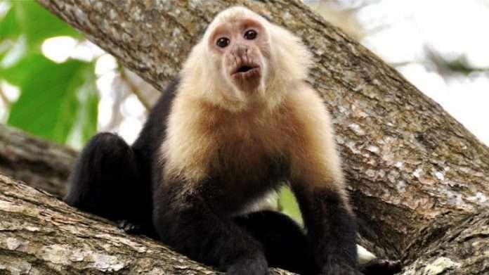 cleethorpes jungle zoo
