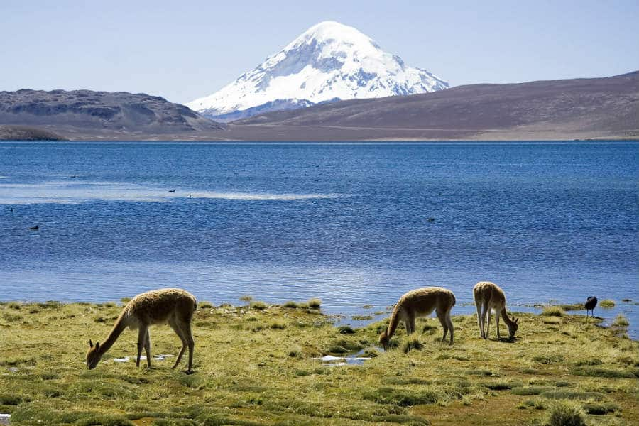 things to do in chile