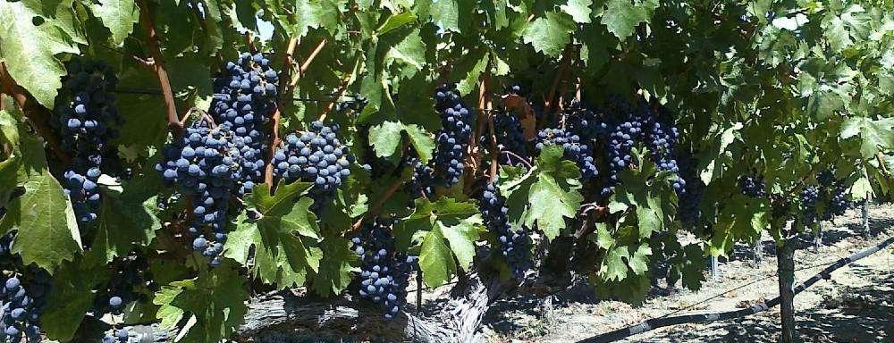 spotto wines