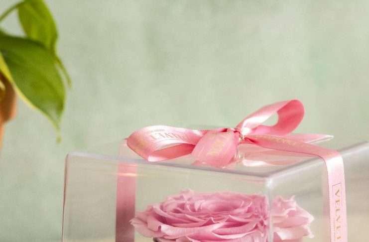 Velvet Rose luxury boxes
